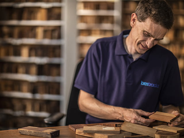 Introduction to softwoods and hardwoods