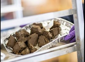 Soil Testing at Element Edmonton