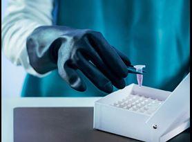 Mycoplasma Safety Testing