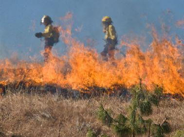 Bushfire Testing